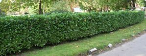 Instant Hedges