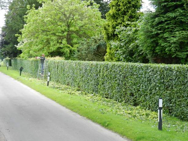 Case Study - Hedge Trimming