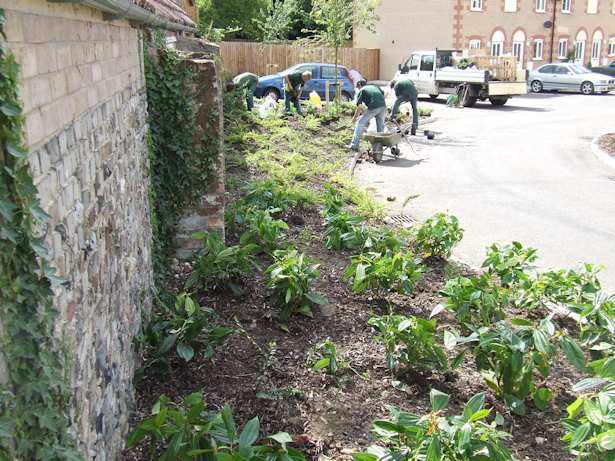 Case Study - Weeding of Verges, Maintenance and new Planting