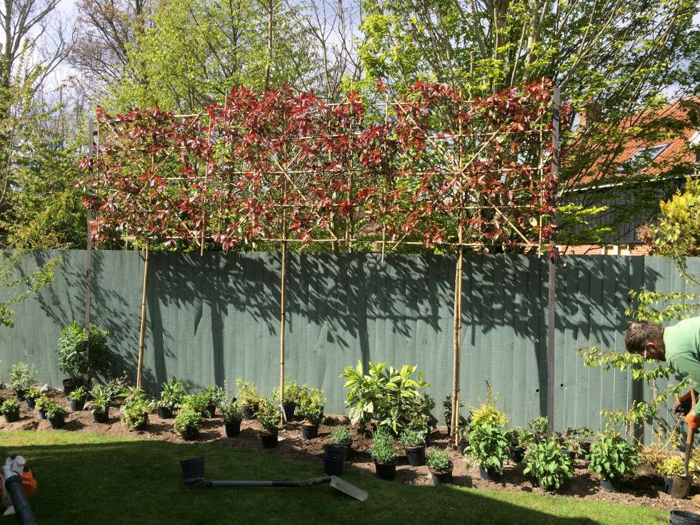 Completed garden designs landscaping garden maintenance for Garden trees photos
